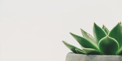 Zielona roślina w szarej doniczce na białym tle.